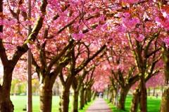 The-Meadows-Edinburgh-Spring