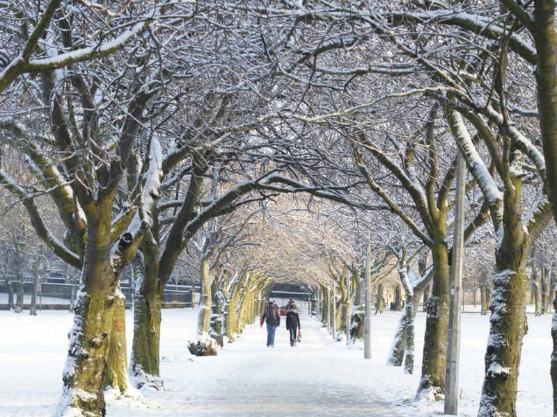 Trees in the snow Edinburgh
