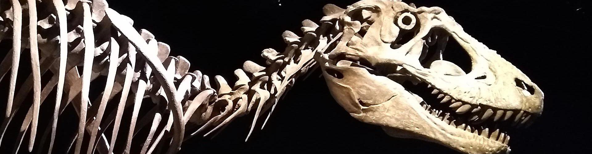 Cast skeleton of a dinosaur