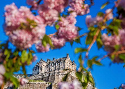 Edinburgh Castle framed by cherry blossom