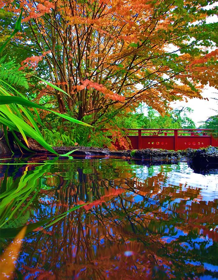 The Chinese garden in the Royal Botanical Gardens in Edinburgh