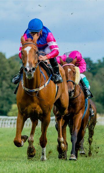 Horse and their jockeys racing