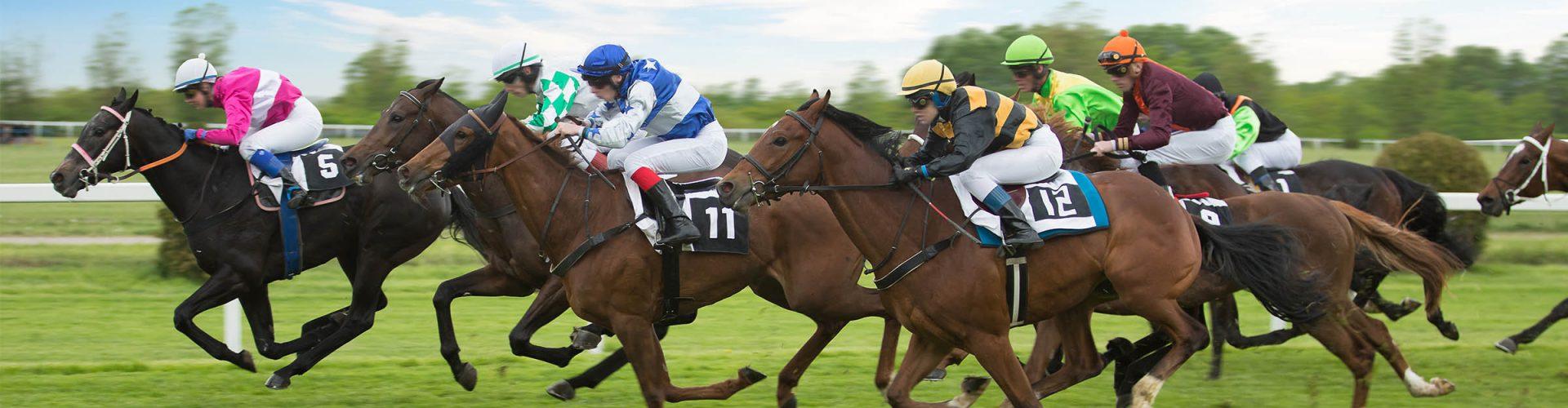 Horses horse racing with their jockeys