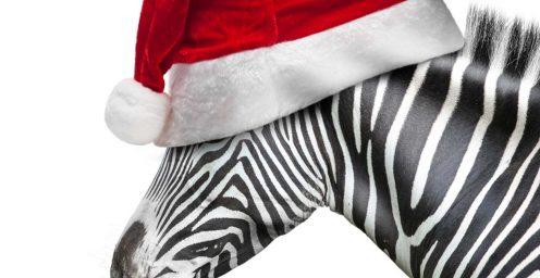 Zebra wearing a santa hat