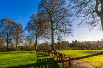 Beautiful benches in the Edinburgh Botanic Gardens in Summer