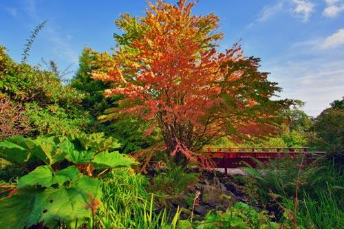 Autumn tree in Royal Botanic Garden in Edinburgh