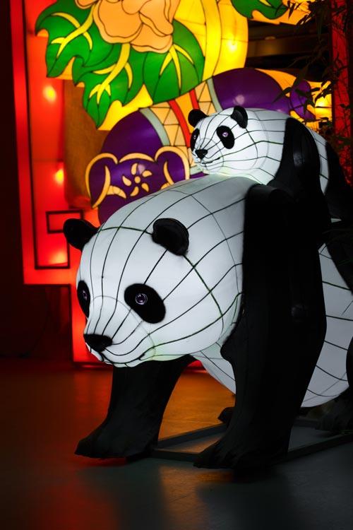 Giant Panda lanterns at Edinburgh Zoo