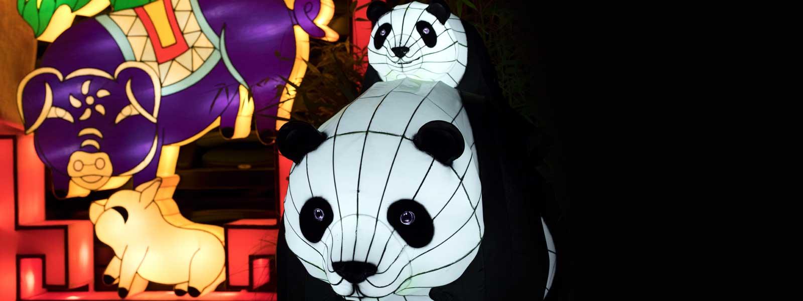 Giant Panda Lanterns