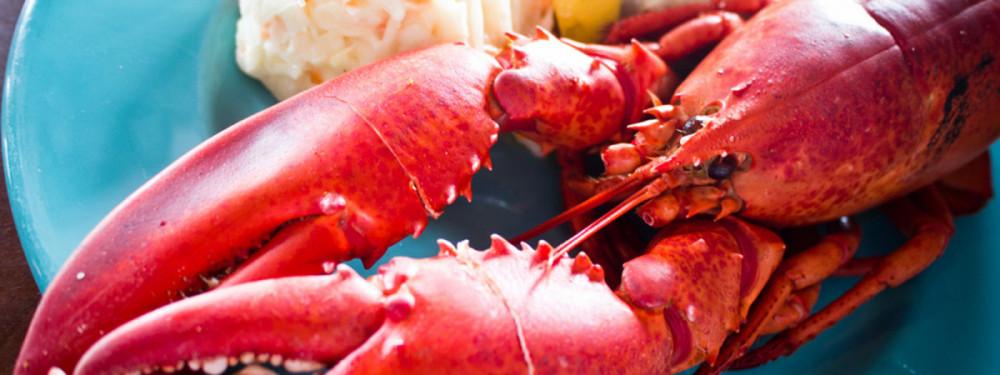 Lobster Nights