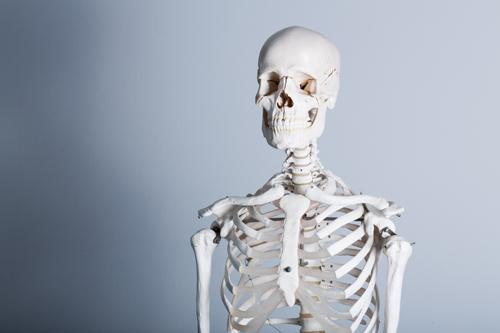 Model of a human skeleton
