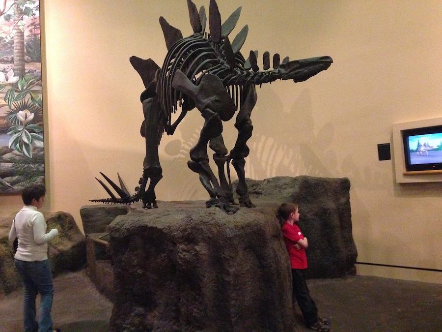 stegosaurus-770221_1280