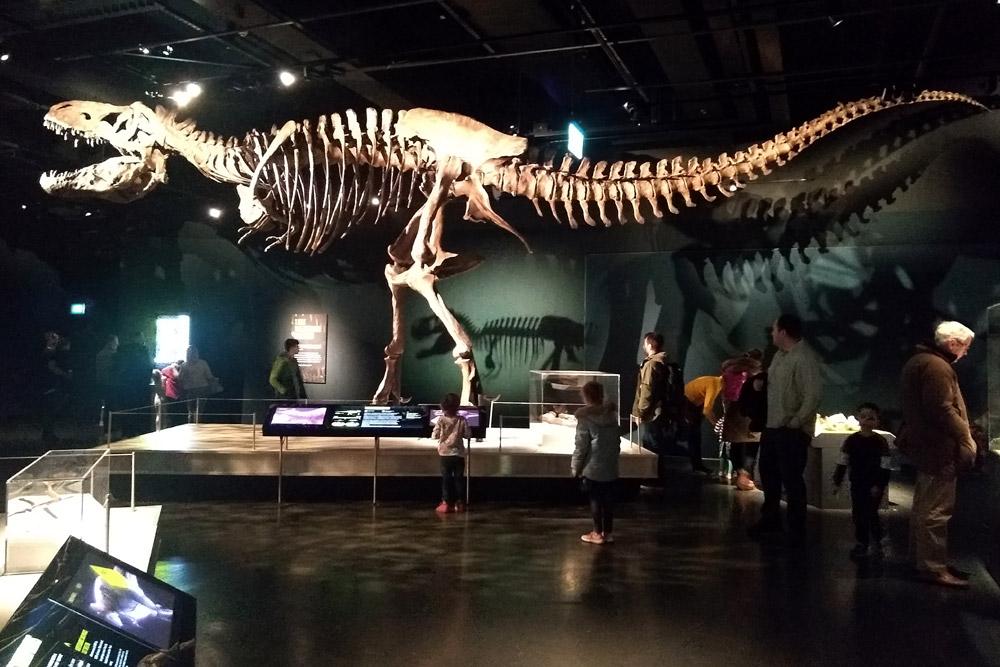 Scotty T Rex Cast Skeleton in Edinburgh